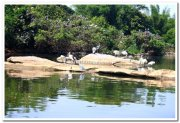 Ranganathittu bird sanctuary photos 2