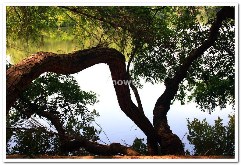 Trees along the lake coast