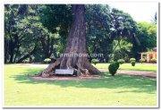 Old tree near summer palace