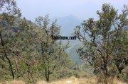 Kodaikanal flora fauna 956