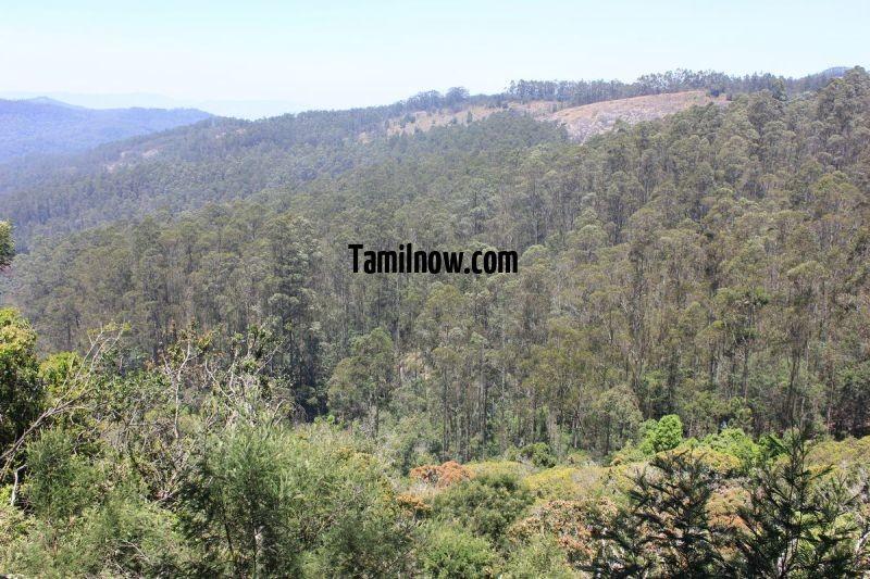 Kodaikanal forest tour 690