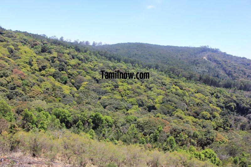 Kodaikanal government medicine forest 301