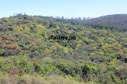 Kodaikanal medicine forest view 327
