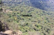 Medicine forests kodaikanal hills 477