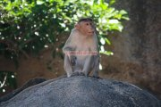 Mahabalipuram picture 5