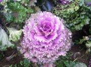 Flowers in ooty garden 1