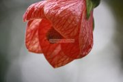 Flowers in ooty garden 13