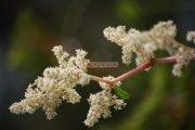 Flowers in ooty garden 14