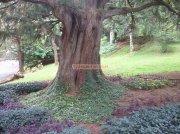 Ooty botanical garden 12