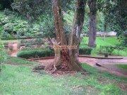 Ooty botanical garden 14
