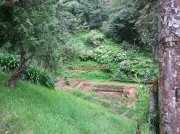 Ooty botanical garden 15