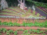 Ooty botanical garden 17