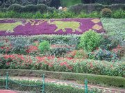 Ooty botanical garden 19