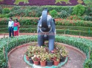 Ooty botanical garden 20
