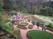 Ooty botanical garden 3