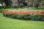 Ooty botanical garden 30