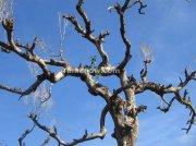 Leafless tree on road