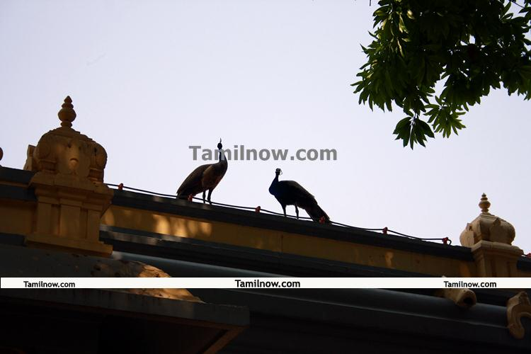 Ramana maharshi ashram 7