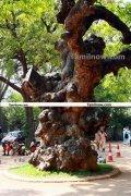 Ramana maharshi ashram 9
