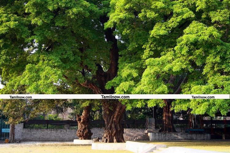 Thiruvannamalai photos 4
