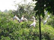 Birds at sanctury
