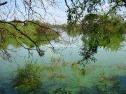Lake at vedanthangal