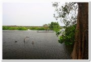 Migratory birds vedanthangal
