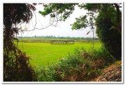 Rice fields near sanctuary