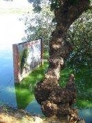 Sign board inside water