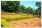 State horticultural farm yercaud 2