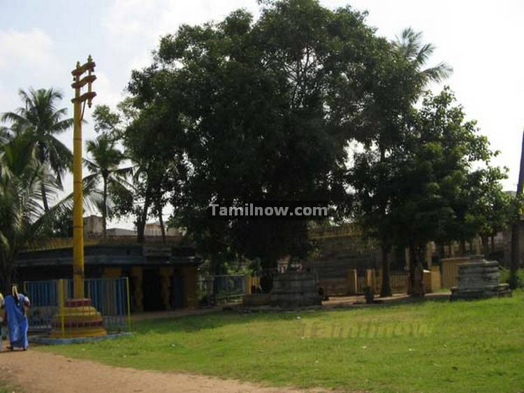 Thiruvatriyur temple photos 7