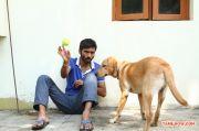 Actor Dhanush 2513