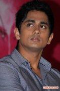 Actor Siddharth 7841