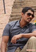 Tamil Actor Siddharth 9219