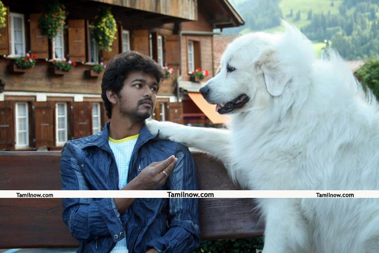 Actor Vijay Photos 03