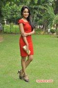 Actress Aditi Chengappa Latest Wallpaper 6276