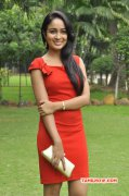 Recent Gallery Cinema Actress Aditi Chengappa 6270