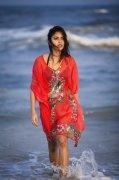 Tamil Actress Amala Paul Recent Images 2705