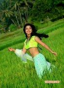 2014 Gallery Ankita Shrivastav Tamil Heroine 9829