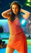 Recent Still Catherine Tresa Tamil Actress 8362