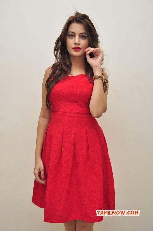 New Photos Deeksha Panth Tamil Actress 9463