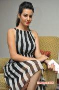 New Pic Deeksha Panth Cinema Actress 6977