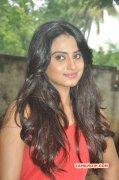 Wallpaper Dimple Chopade Actress 3503
