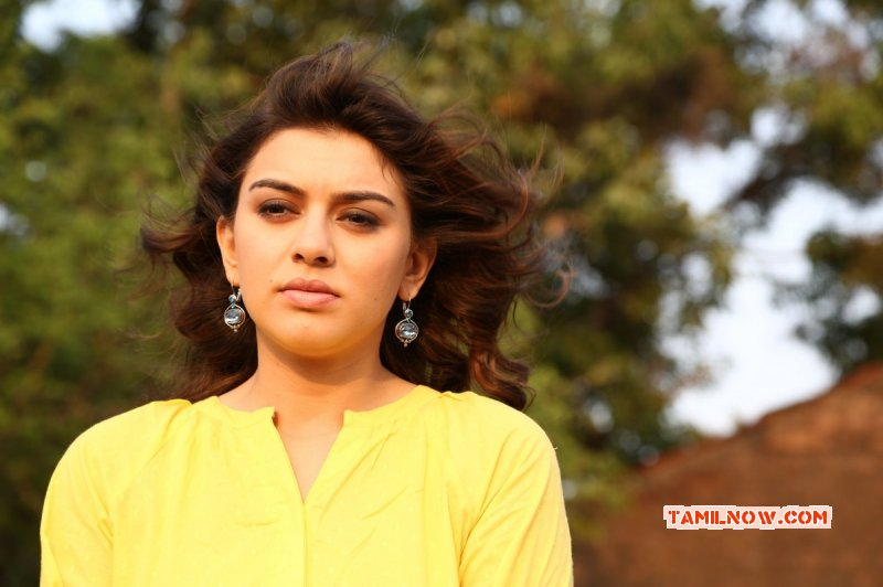 Hansika Motwani Recent Photo 7958