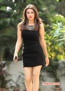 Hansika Motwani Tamil Heroine 2015 Stills 5149