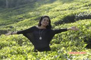 Oct 2016 Picture Iniya Tamil Movie Actress 1519