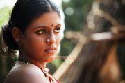 Tamil Actress Iniya 8829