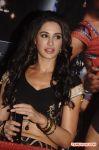 Tamil Actress Nargis Fakhri 8260