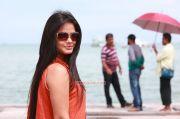 Tamil Actress Neetu Chandra Stills 9302