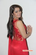 Movie Actress Nikitha Narayan New Image 3558